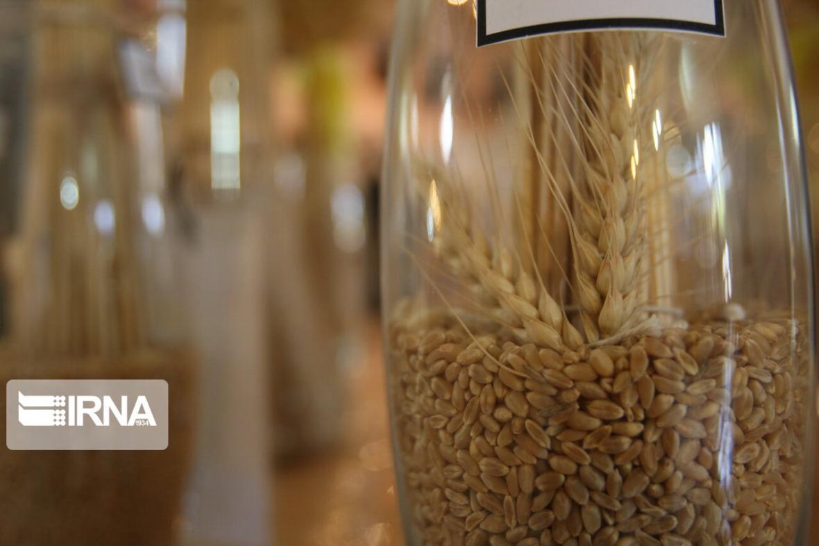 خبرنگاران تداوم حمایت وزارت جهاد کشاورزی از تولیدکنندگان بذر