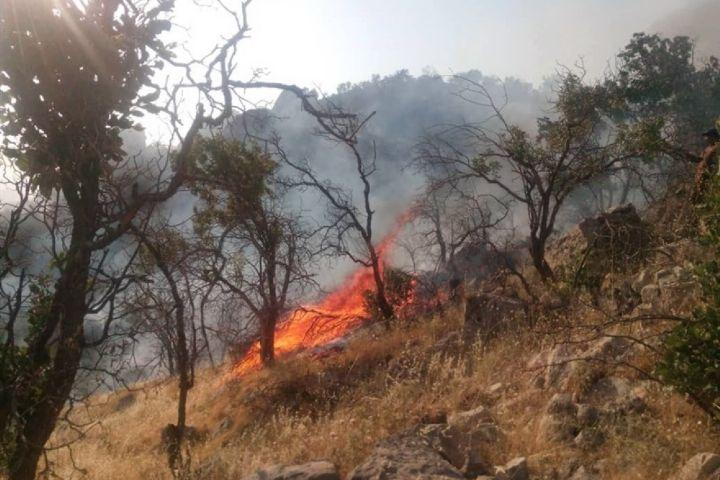 اقدامات کنترلی و پیش گیری از آتش سوزی درختان و علف های هرز در بوستان ها و معابر مرکز شهر