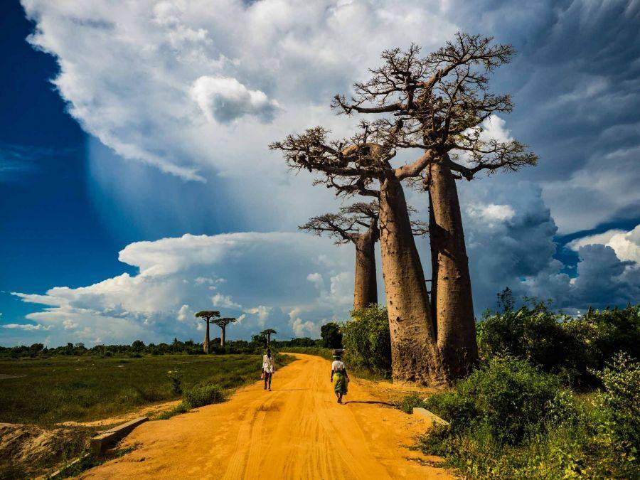روایت تصویری از چهارمین جزیره زیبای دنیا , جزیره ماداگاسکار