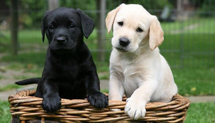 تعبیر خواب سگ سیاه و سفید چیست؟ دشمن یا رسوایی؟