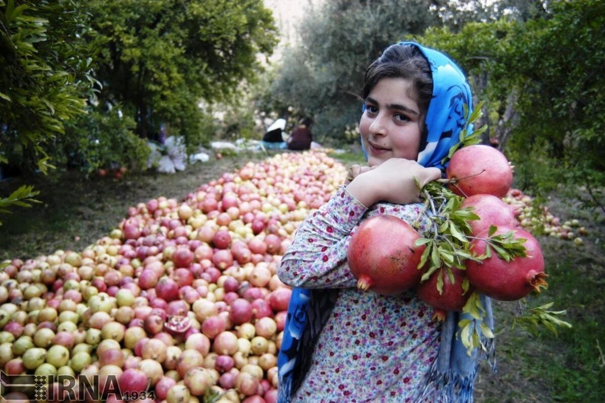 خبرنگاران میزان تولیدات باغی کردستان 160 هزار تن افزایش یافت