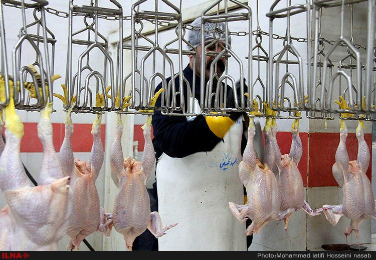 افزایش دوباره قیمت مرغ، یک کیلو مرغ 24 هزار تومان شد