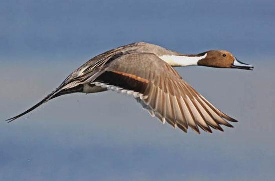 10 پرنده تیز پرواز دنیا را بشناسید