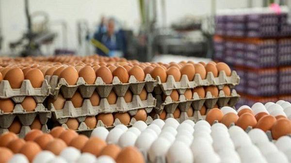 تولیدکنندگان موظف به رعایت قیمت مصوب تخم مرغ هستند
